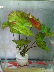 Thủy Sinh Tuấn Anh-Chuyên cây & Rêu Thủy Sinh, Cá Cảnh Biền & Hồ Cá Cảnh Biển - 4