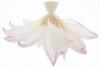 Lotus_Flower_IMG_3091 Louts Flower: Hi-Key