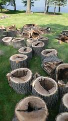 L1050986 (sweatervest_lk) Tags: road tree sections brinker