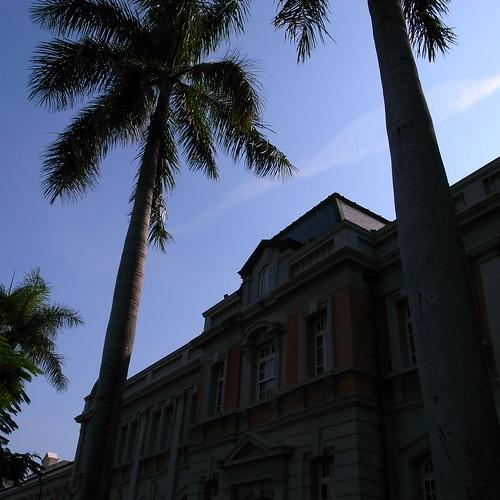 ヤシの木は南国の代表です。