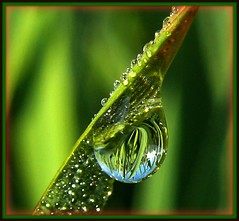 Dew Laden Blade of Grass (pinecreekartist) Tags: macro verde green nature drop acqua waterforms chiaramonte wellsboropa bokehlicious eyecandyart excapture gotasdrops djangosmasterclass dewandwaterdrops pinecreekartist tiogacountypachiaramonte