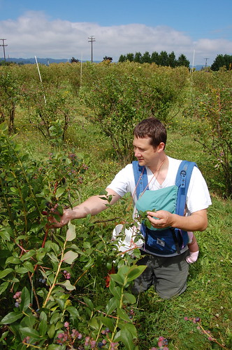 Bleckmanns Picking Blueberries