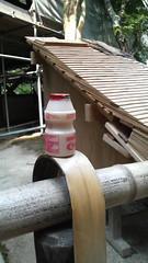 銀閣寺の屋根部分と乳酸菌