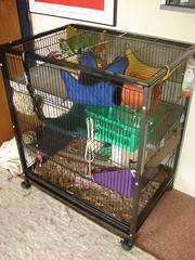 The Abode. (Miaaa.) Tags: pet toys rat cage rats hammock fancy setup habitat abode enrichment ratcage