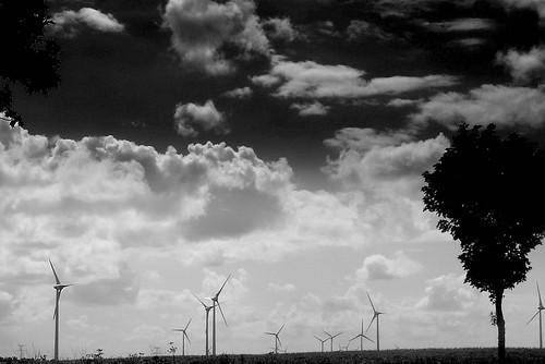 Fotografía de unos molinos de viento aerogeneradores en medio del campo con un árbol a la derecha, foto en blanco y negro, posiblemente tomada desde un tren