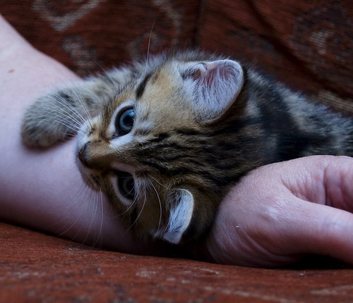 cute affectionate kitten cat pic