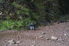 DSC01826 (margaretrowbotham) Tags: nova rocks scotia hopewell