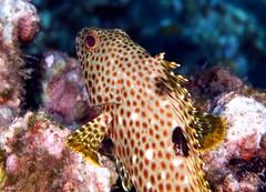 Underwater Camo
