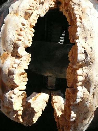 Bear Trap Filled With Teeth!