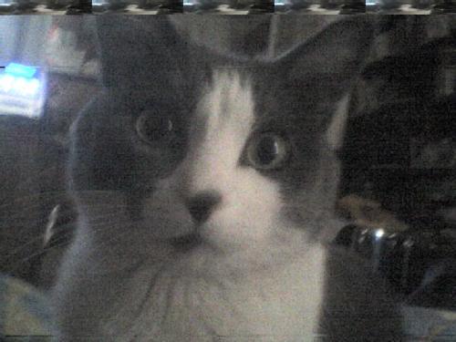 gatoto asustado