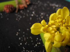 shiver (Jus.) Tags: flowers sun photography blackwhite aperture focus clones zippers rosses happyflowers artofphotography