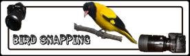 Bird Snapping White banner 30%
