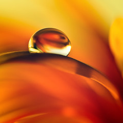 Warmth (Villi.Ingi) Tags: red abstract hot flower macro nature water yellow closeup canon square golden flora warm touch warmth drop touching pipc eow giap justimagine 40d platinumheartaward world100f alemdagqualityonlyclub