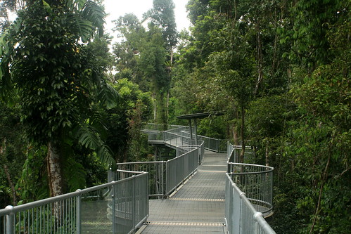Mamu Rainforest Canopy Walkway ... & 6 Amazing Rainforest Treetop Walks - WebEcoist