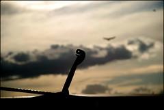 HASTA LOS BARCOS SONRIEN CUANDO VAN A ZARPAR... (ABUELA PINOCHO ) Tags: espaa detalle contraluz puerto atardecer spain barco nubes gaviota castellon burriana easycam macromania enganche