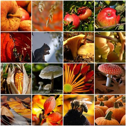 Herbstlicher Spaziergang durch Mo`s Foto-Garten