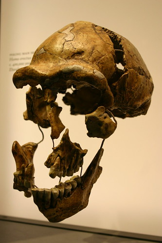 Peking Man Skull Fragments