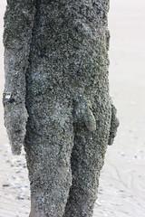 Barnacle bill (terry.1953) Tags: sculpture art beach nude barnacles gormley crosby antonygormley maleform anotherplace crosbybeach nakedart