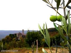 Piemonte d'Istria: Olive, la raccolta. (pierovis'ciada) Tags: novembre olive istria istra raccolta abigfave esodo istriani zavrsje piemontedistria istroveneto