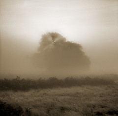 Park VII (sixbysixtasy) Tags: park morning light bw mist fern tree london 6x6 mamiya film nature grass fog sepia dawn early kodak hc110 sunburst bracken mamiya6 handdeveloped somethingspecial adox chs50 alwaysexc