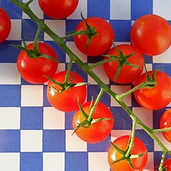 chequered tomatoes (penwren) Tags: red stilllife colour kitchen sunshine tile square pattern tomatoes sunny windowsill cherrytomatoes blueandwhite catchycolorsred catchycolorsblue fruitandvegetables rainingagain yessunnyyesterday dontknowwhyitsturnedoutsolarge