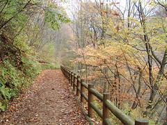 大滝の路 ウッドチップのいい香り 檜原都民の森