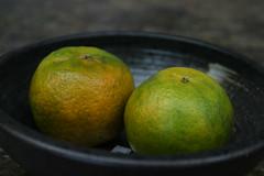 三富花園農場:放了一晚在外的橘子