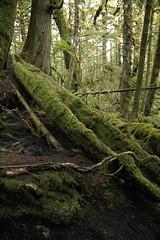 Abandoned Canoe (Larssa) Tags: summer canada green abandoned forest nationalpark moss bc britishcolumbia canoe 2008 westcoast queencharlotteislands haida cmt haidagwaii gwaiihaanas morex roseharbour moresbyexplorers kunghitisland