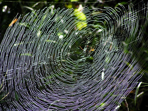 Spider web work of art