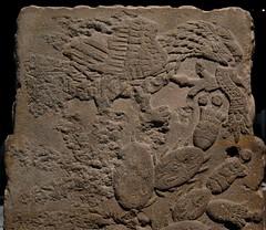 Aztec Eagle teocalli monument (Teyacapan) Tags: art archaeology stone museum mexico eagle aztec snake carving culebra museo nopal aguila escudo serpiente teocalli