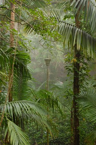 A lamp in the jungle?