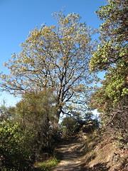 Saratoga Gap Trail