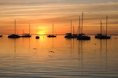 Crandon Park Marina at sunset (asawaa) Tags: sunset sky seagulls nature birds silhouette marina boats seaside florida miami shore seashore southflorida southfloridasky crandonpark crandonparkmarina