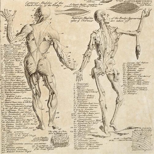 Morbid Anatomy: Anatomical Chart From \