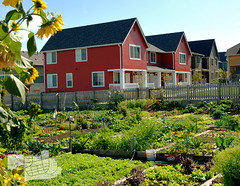 Seattle's High Point provides community gardens on a redevelopment site, without scarificing density (by: Doug Scott, AIA)