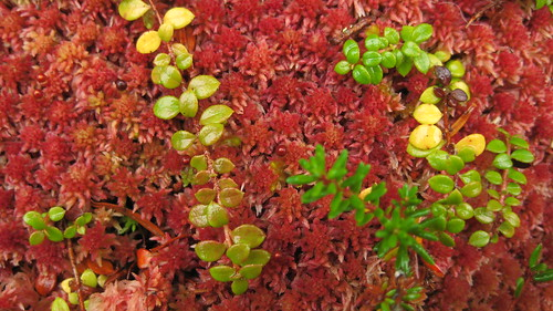 The Moss is Crimson Now
