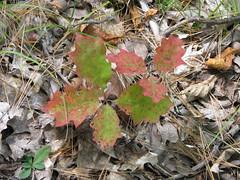 IMG_4105 (The Greenleaf's) Tags: nature walk wal