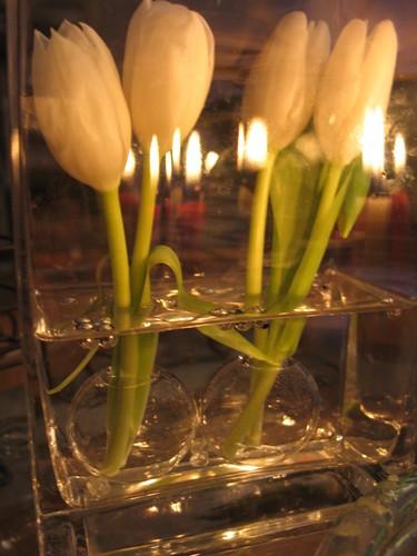 tulipe 014