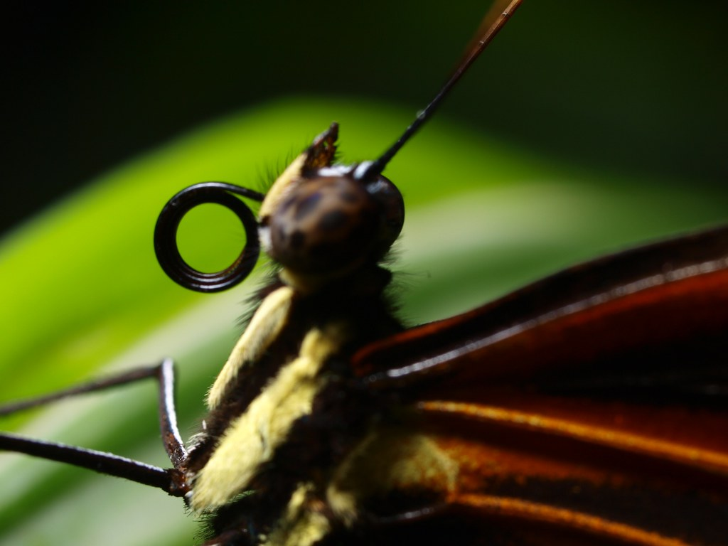 Proboscis: Backdrop