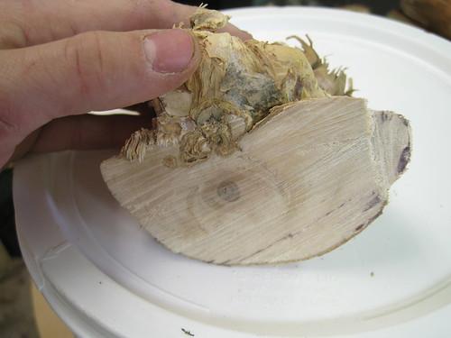 small chunk of paperbark limb