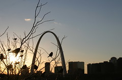 St. Louis Skyline (B. Madison) Tags: sunset buildings river mississippi arch landmark mo missouri stlouisarch eadsbridge jeffersonnationalexpansionmemorial stlouisbirdsskylinesunsetskytreefavorite