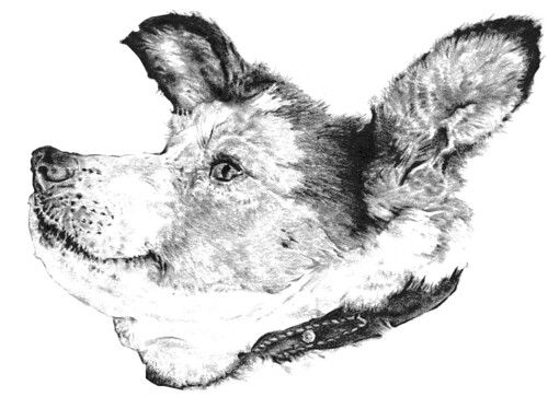 dog head (pencil)