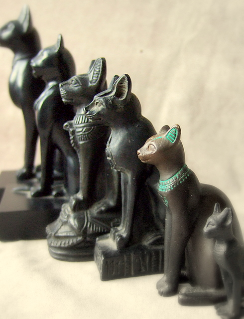 Black cats - Egyptian brothers