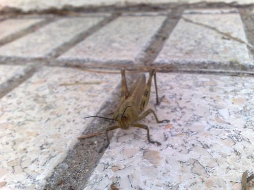Cricket spot c