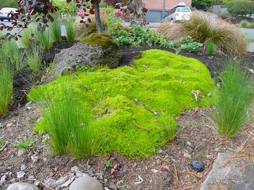 Scottish moss