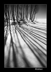 ( Ali Shokri / www.alishokri.com) Tags: winter light blackandwhite bw snow tree landscape blackwhite perfect searchthebest iran quality azerbaijan loveit just excellent 2008 photoart soe 07 backandwhite watcher  themoulinrouge  naturesfinest goldenglobe blueribbonwinner firstquality bwdreams supershot  outstandingshots flickrsbest spselection utatafeature abigfave shieldofexcellence platinumphoto superaplus aplusphoto ultimateshot holidaysvacanzeurlaub superbmasterpiece infinestyle treesubject diamondclassphotographer flickrdiamond megashot allin1 ysplix amazingamateur superlativas onlythebestare eliteimages fiveflickrfavs excapture 1on1photooftheweek flickrslegend betterthangood theperfectphotographer goldstaraward ostrellina flickrestrellas picswithsoul showmeyourqualitypixels alemdagqualityonlyclub wwwalishokricom alishokri 1on1photooftheweekmay2008