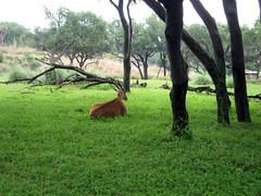 African Safari at Animal Kingdom