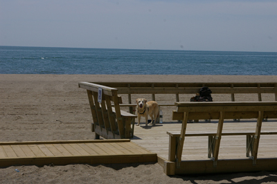 Beach Viewing Platform