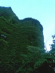 Castle-VINE-ea