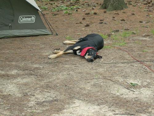 Zonie Camping at Sugar River